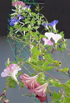 18flowers.jpg
