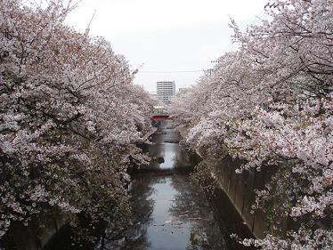 ohanami_3_2010.jpg